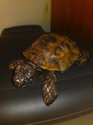 черепаха «Зинаида», Сувениры ручной работы