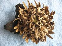 Цветок (хризантема) из натуральной кожи